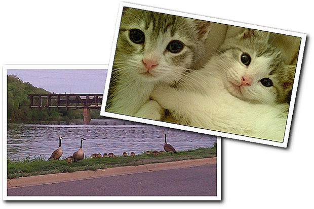Kittens and Geese