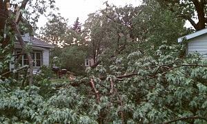 Yard by St. Cloud Hospital.