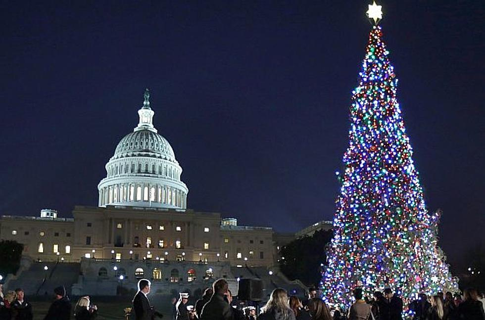 united states capitol christmas tree to but cut this fall from northern minnesota - Christmas In The United States