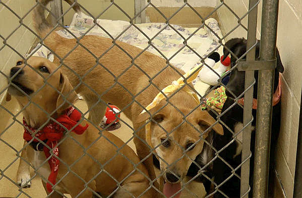 three puppies from india arrive at tri county humane society video. Black Bedroom Furniture Sets. Home Design Ideas
