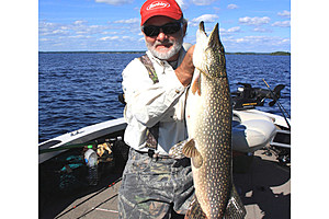 Jerry Carlson  8331: Feisty northern are one of the bonus fish we always find when targeting walleyes.