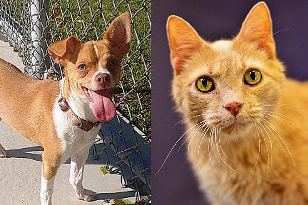 Tri-County Humane Society Photos